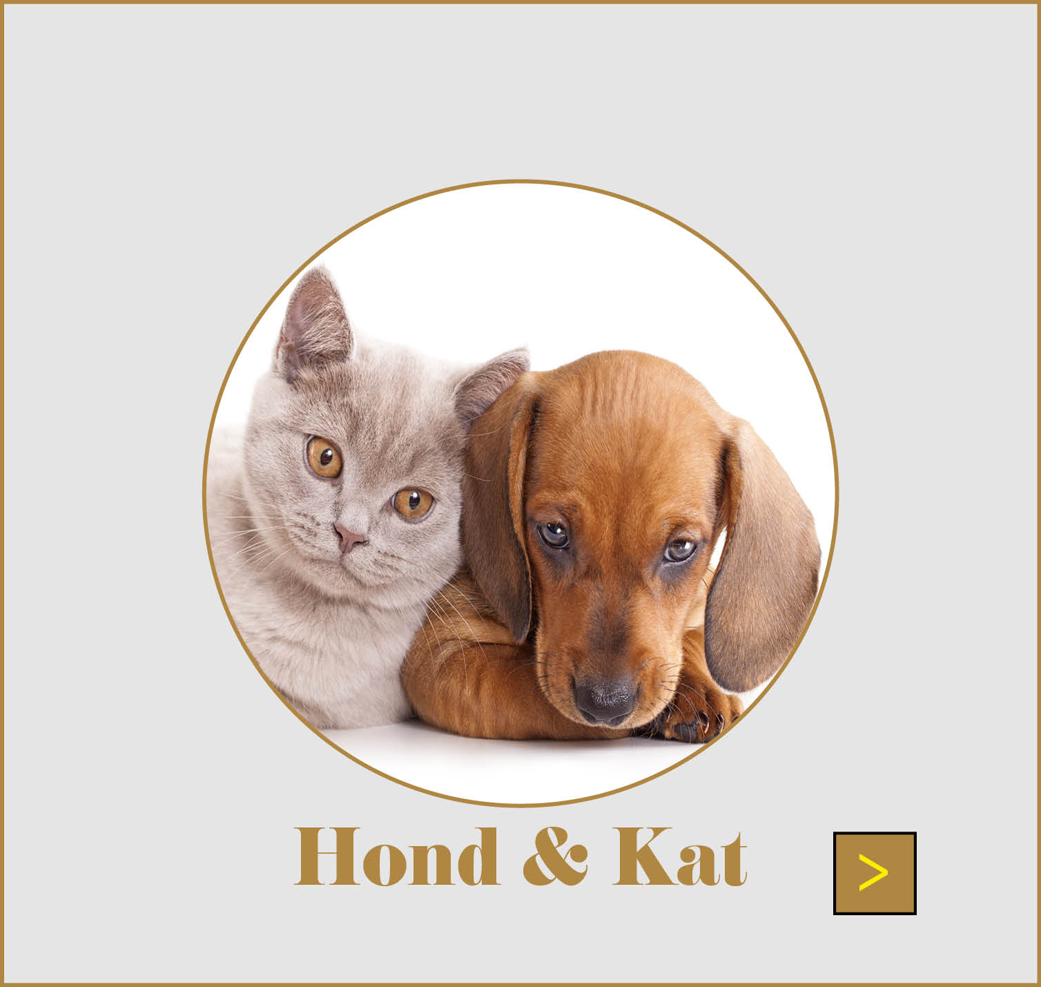RUBRIEK HOND & KAT